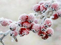 Winter garden tips